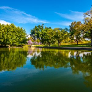 Trees and lake in tranquil park setting